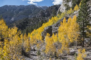 Three Reasons to Welcome Fall in Northern Nevada